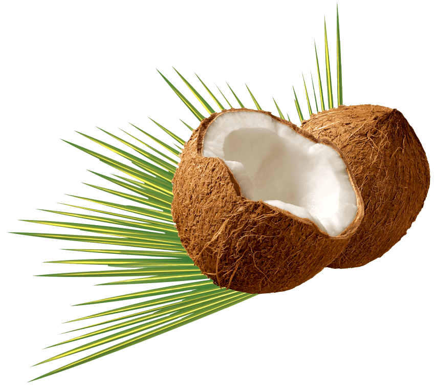 Coconut png images. Free toppng transparent