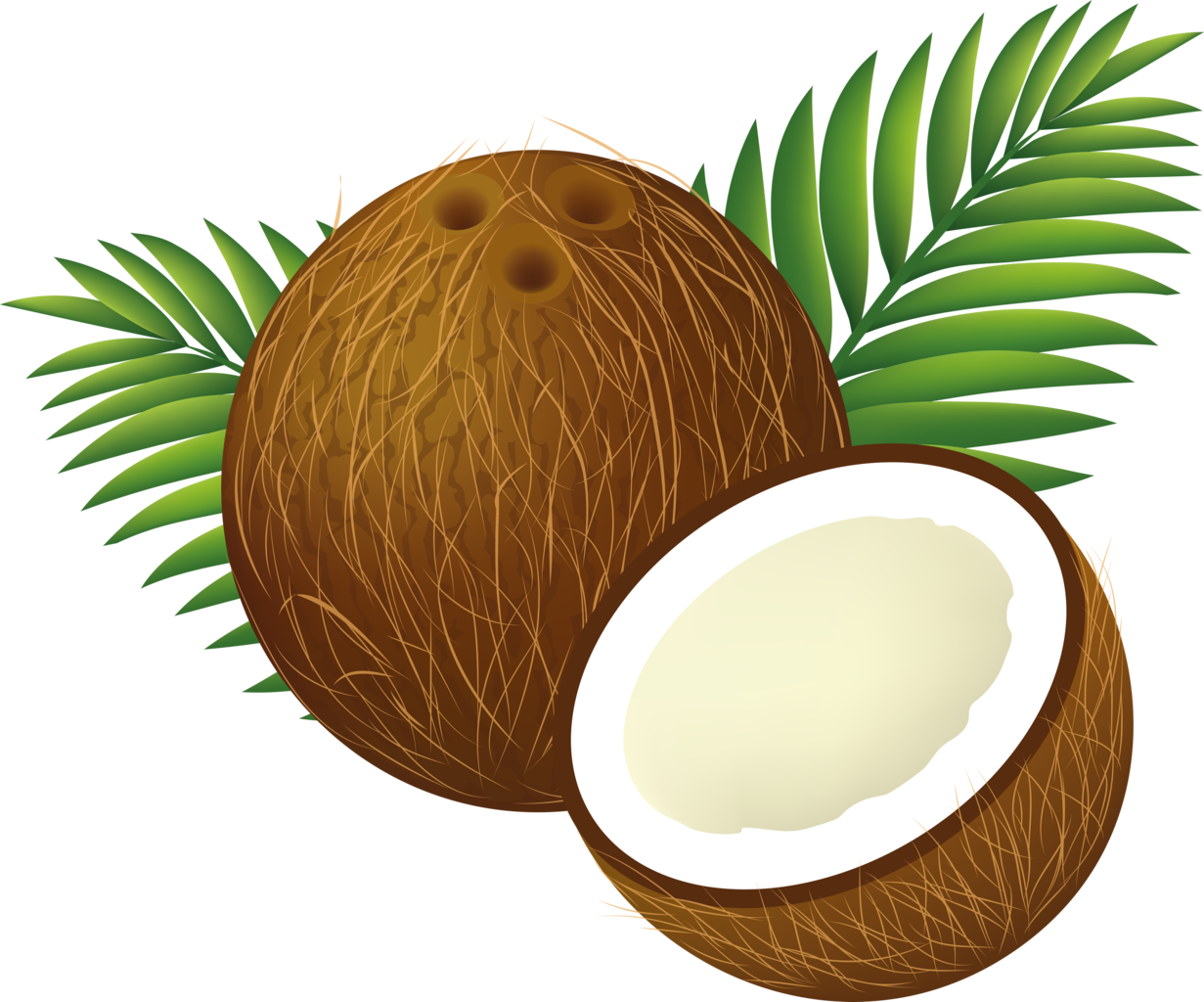 File clipart cartoon png. Coconuts vector coconut husk graphic black and white