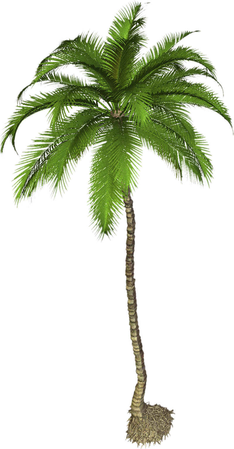 Coconut tree png. Download free photo dlpng