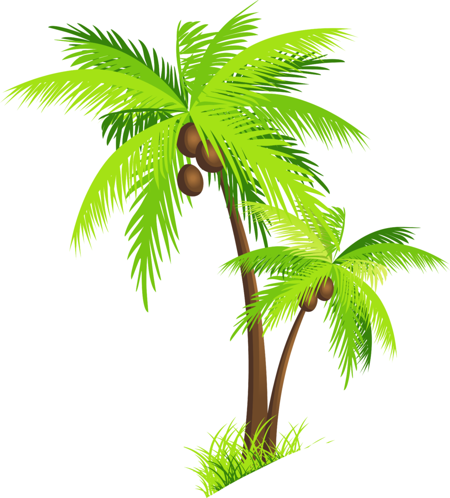 Palm tree watercolor png. Coconut clipart peoplepng com