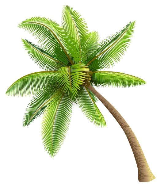 Coconut tree png. Image background arts