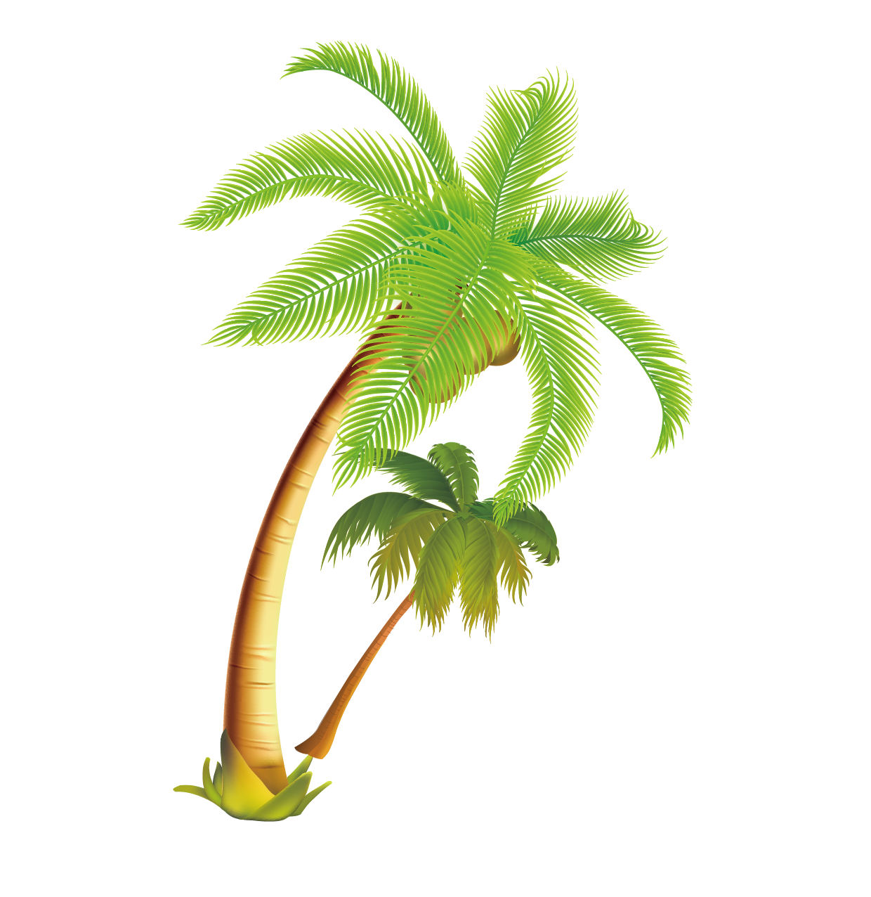 Coconut tree png. Arecaceae tropical vector material
