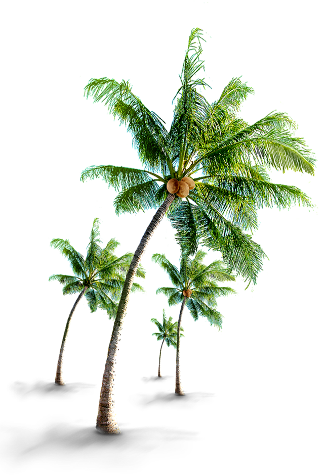 Coconut tree png images. Exquisite vacations travel destination