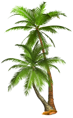 Coconut tree png images. Palm download free pictures