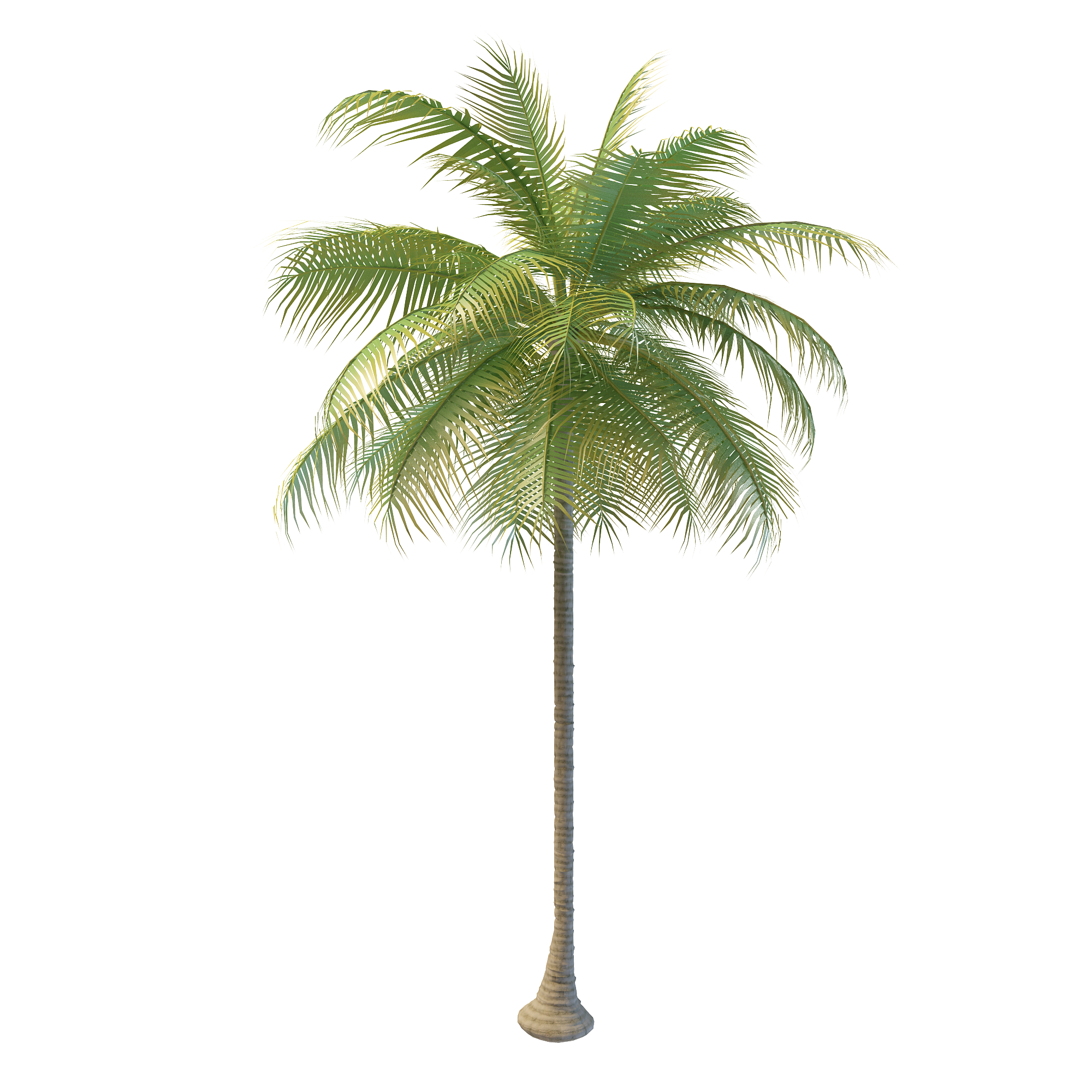Coconut tree png images. Arecaceae water nata de