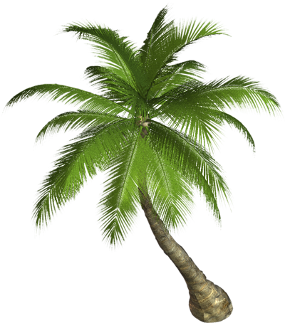 Image transparent arts. Coconut tree png images vector freeuse download