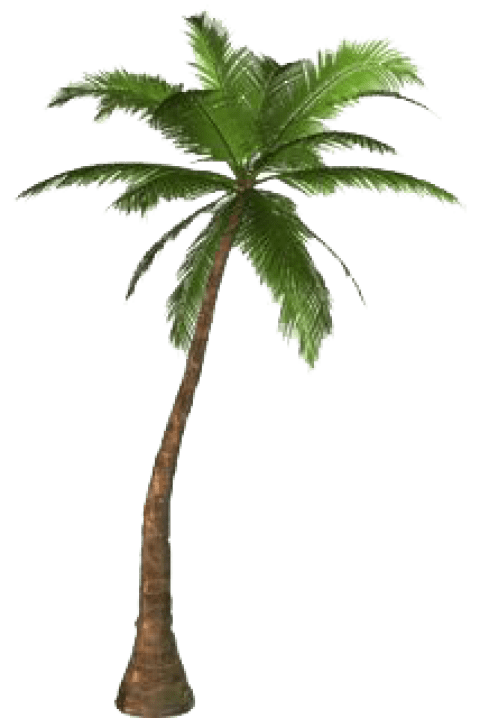 Tree free images toppng. Palm leaf png transparent png freeuse download