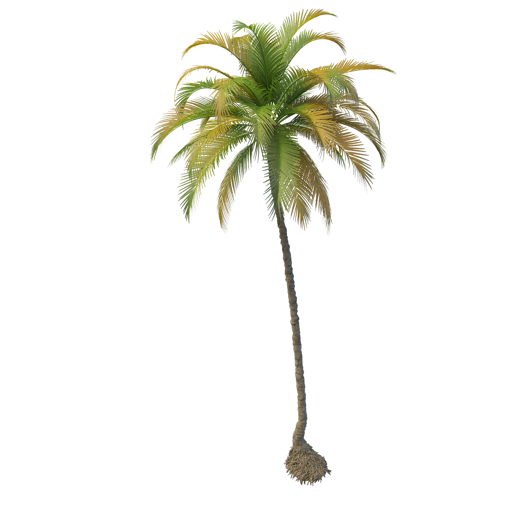 Coconut palm png. Tree images transparent free