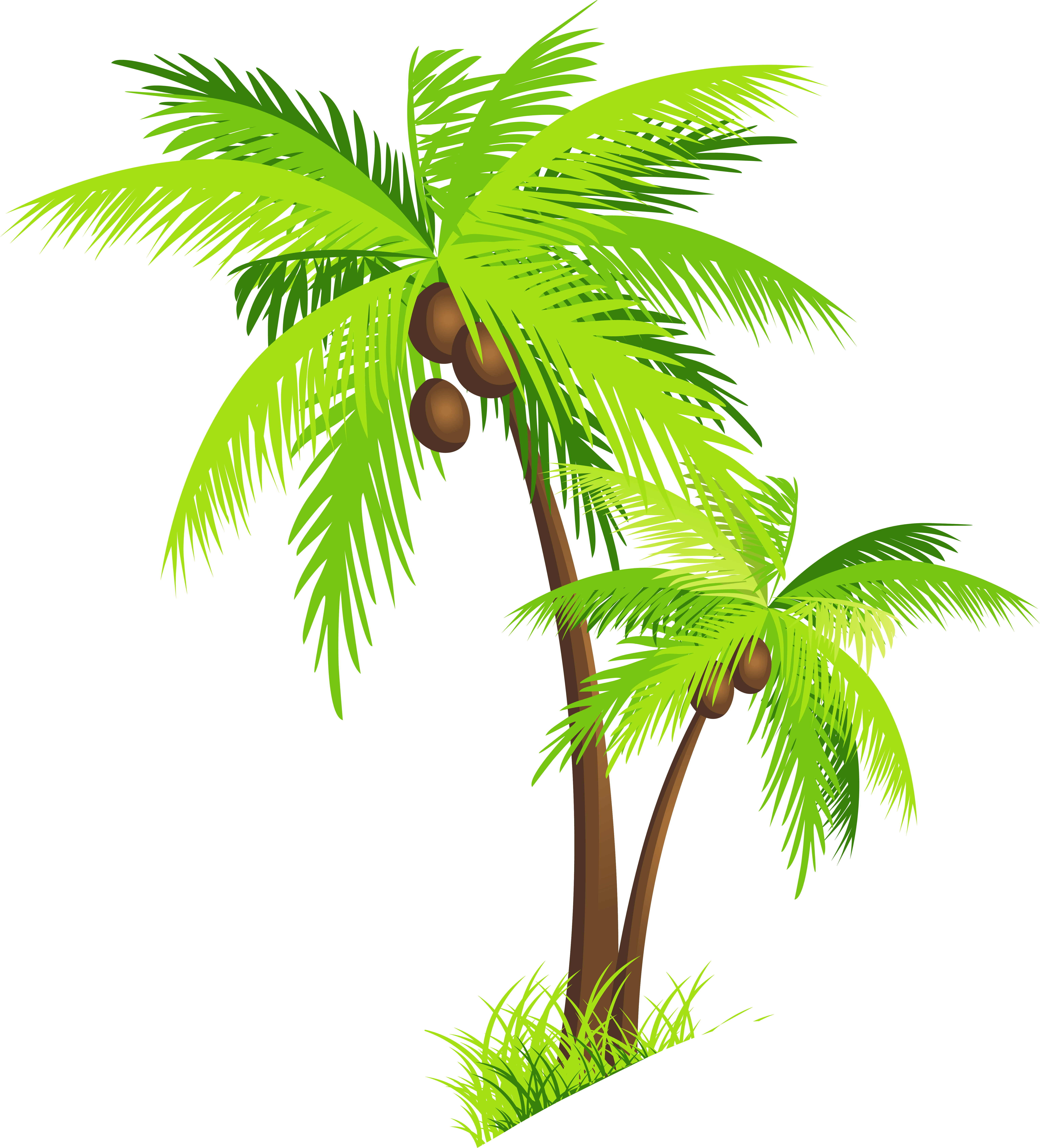Coconut tree vector png. Transparent images pluspng clipart