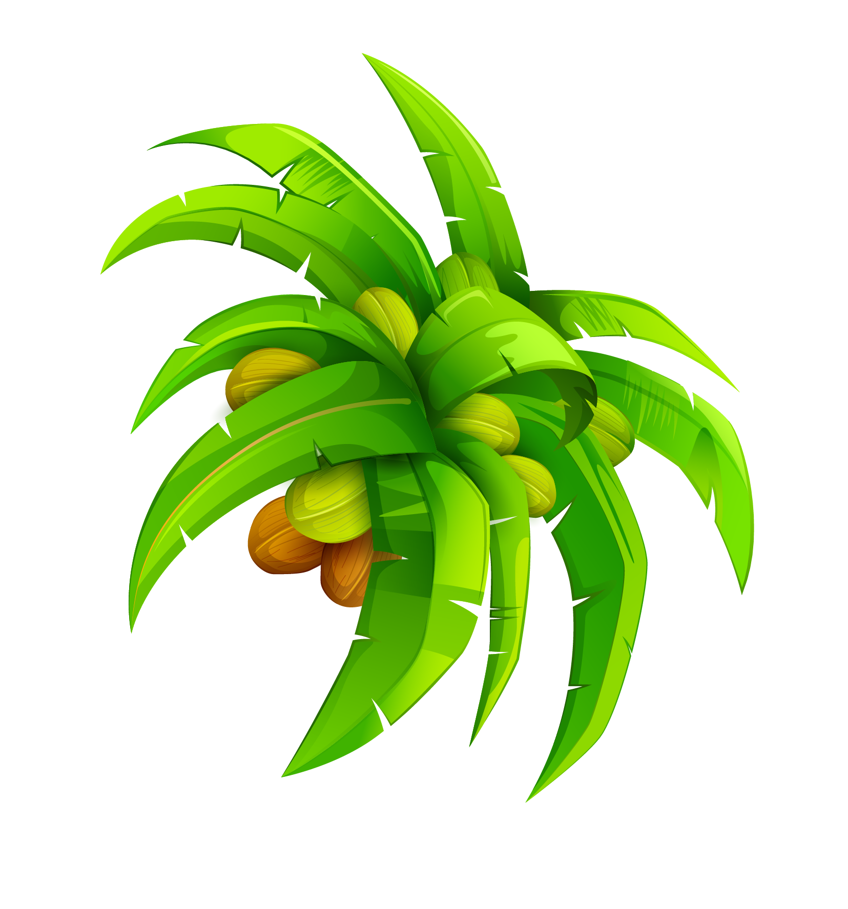 Coconuts vector cartoon. Leaf coconut euclidean transprent