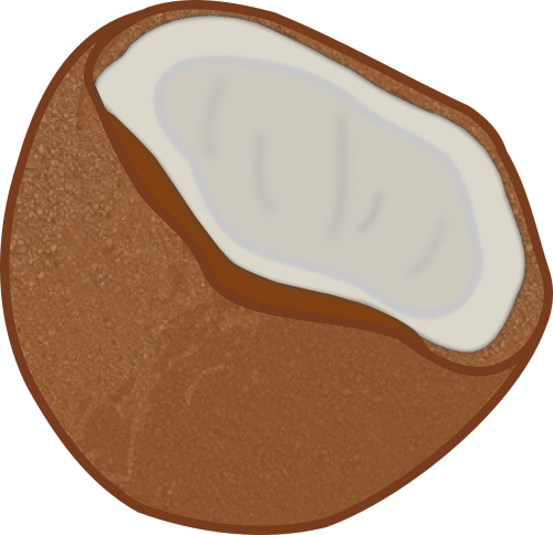 Exotic sweet palm free. Coconuts vector coconut husk clipart download