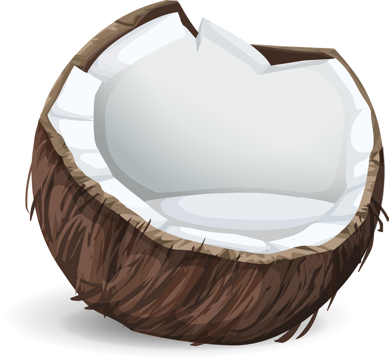 Why water filters should. Coconuts vector coconut husk clip download