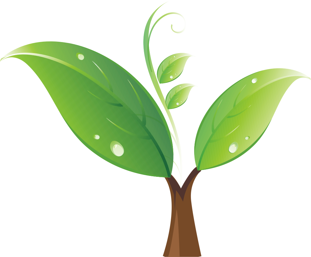 Coconuts vector sprout. Seedling tree clip art