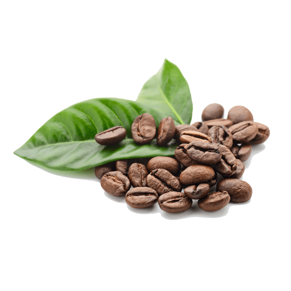 Coffee beans png. Leaves transparent stickpng food