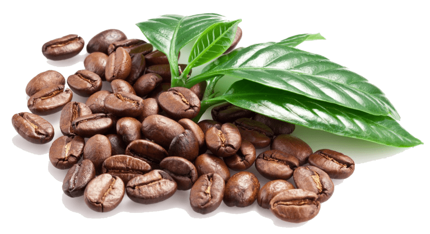 Coffee grain png. Download beans images background