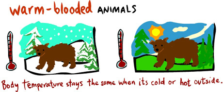Cold clipart cold animal. Warm blooded and animals