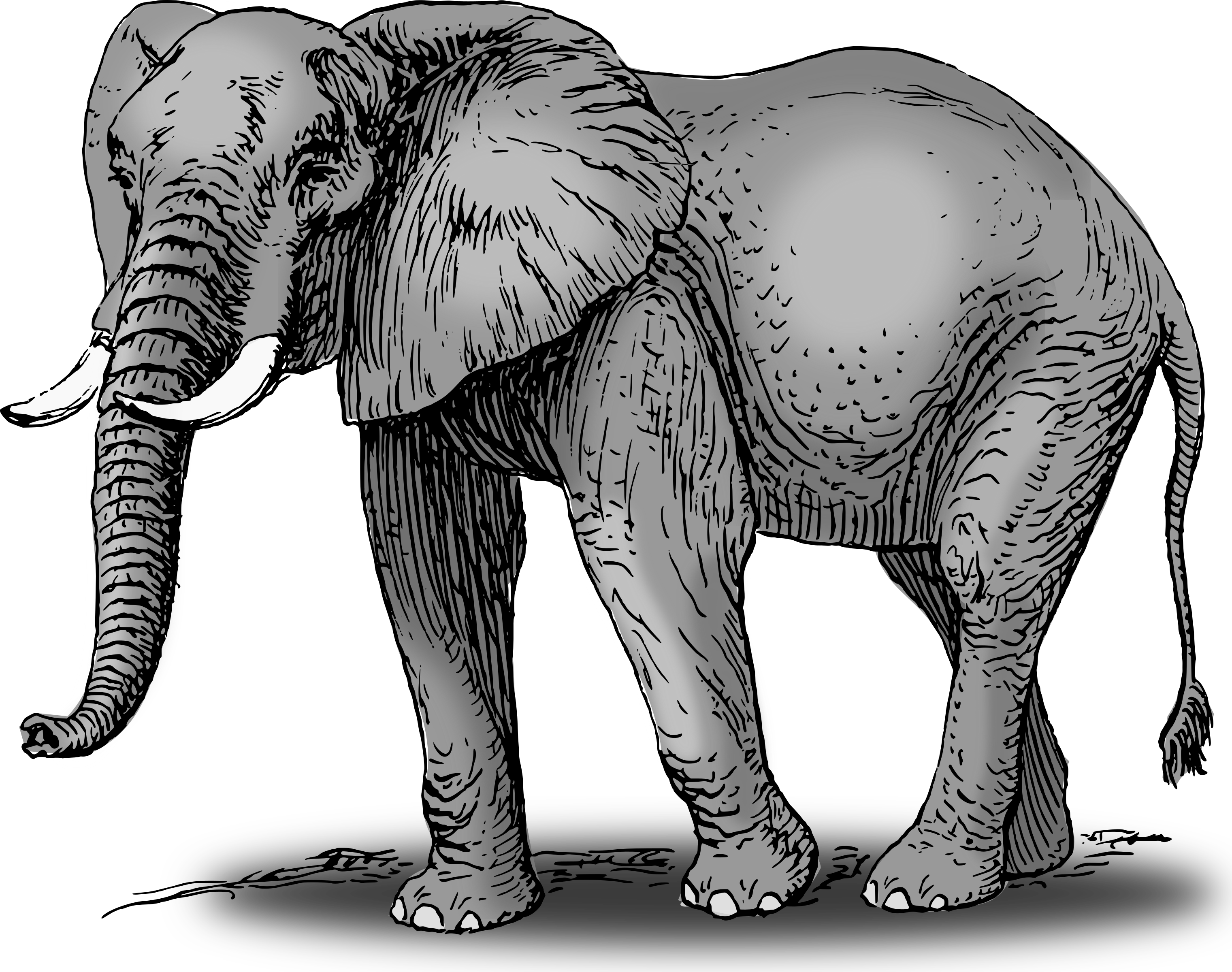 Colored big image png. Color clipart elephant vector royalty free