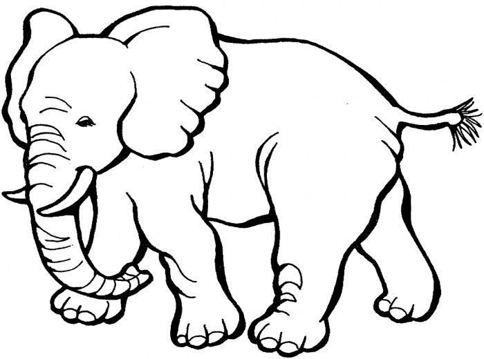 Color clipart elephant. Best y blank