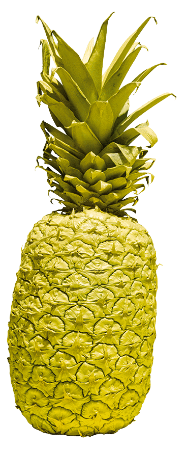 Colored drawing pineapple. Vans vault collection shoes