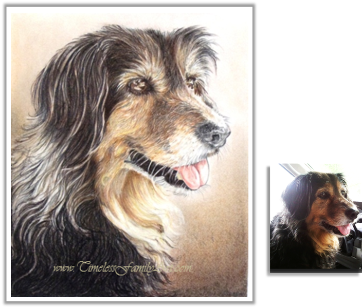 Portraits drawing colored pencil. Custom pet paintings from