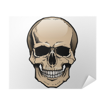 Colored drawing skull. Human with a lower