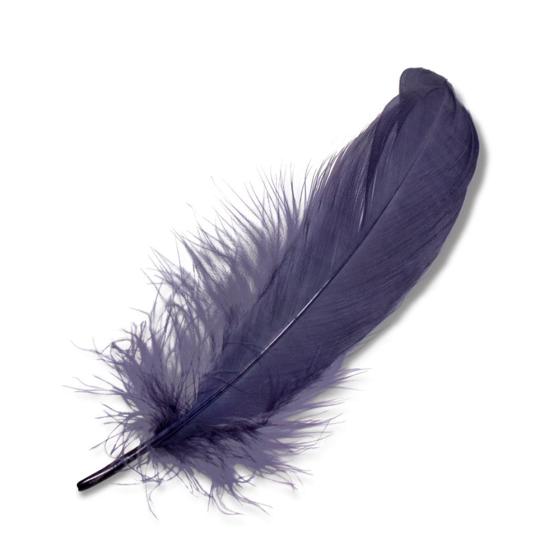 Transparent feathers lightweight. Feather png images free