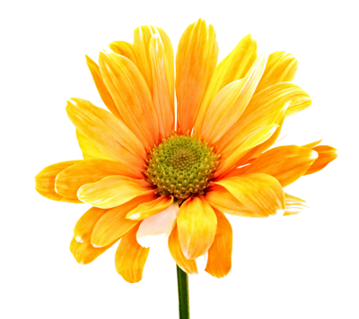 Colorful flower png. Download free transparent image