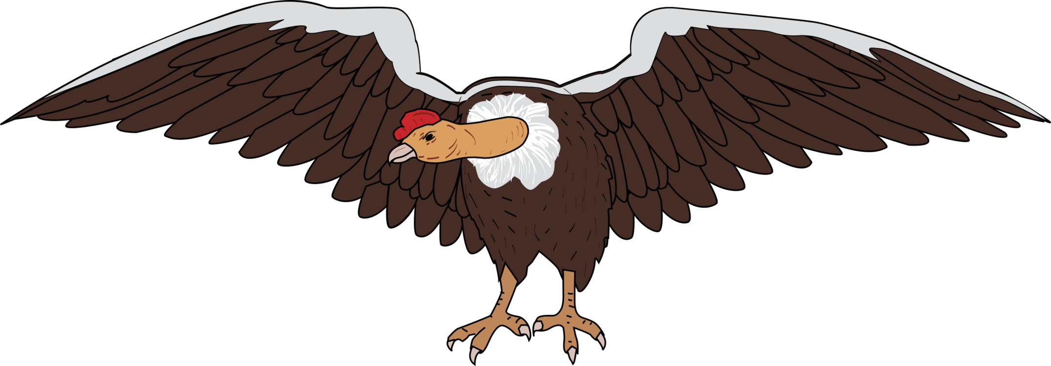 Condor drawing andean. Bird the california vulture