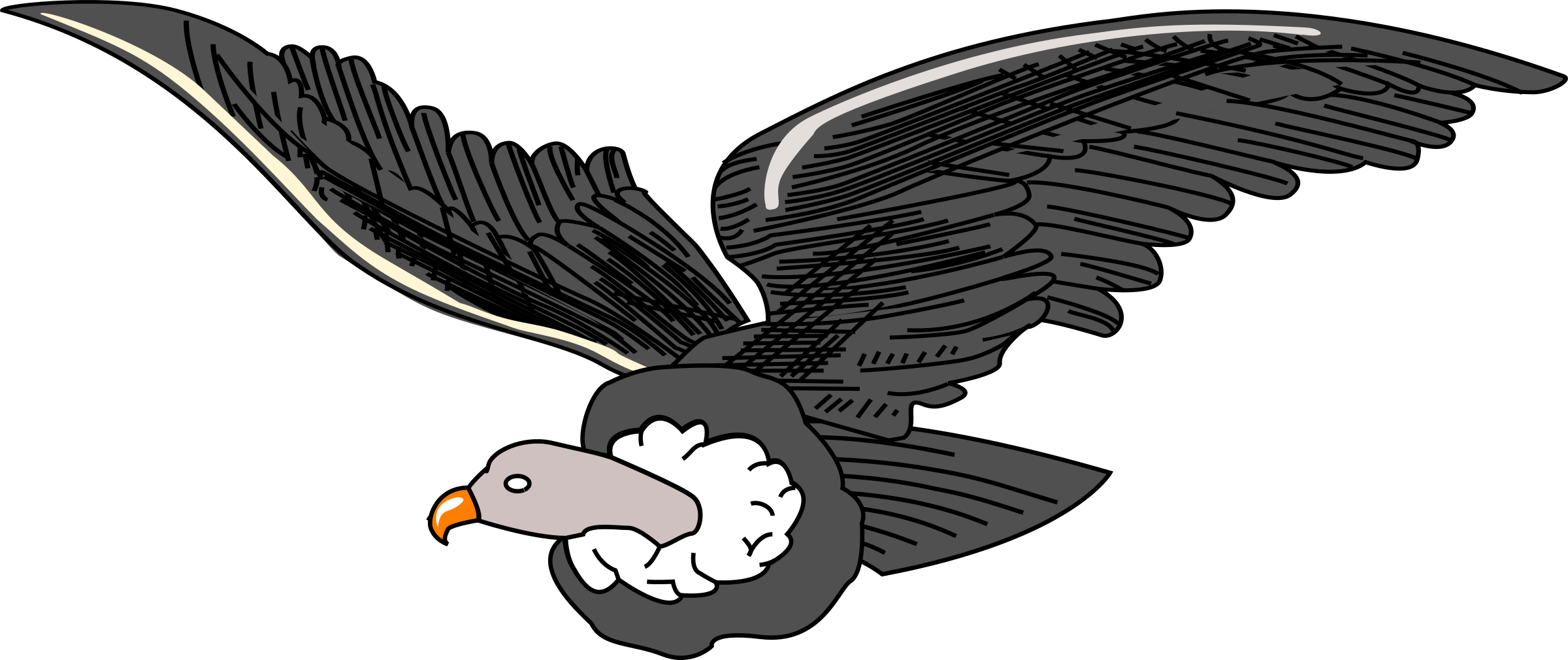 Clipart big image png. Condor drawing arm image freeuse library