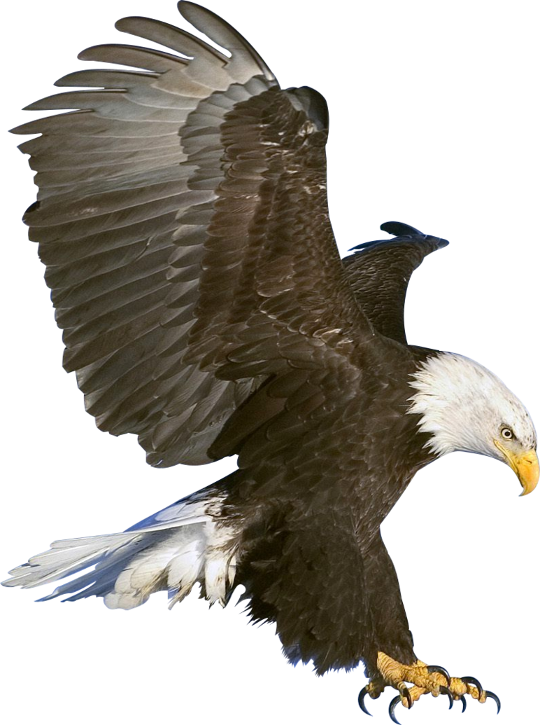 Condor drawing eagle wingspan. Different types of
