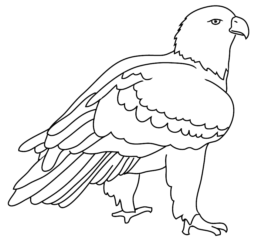 Bald eagle drawings outlined. Condor drawing arm banner library stock