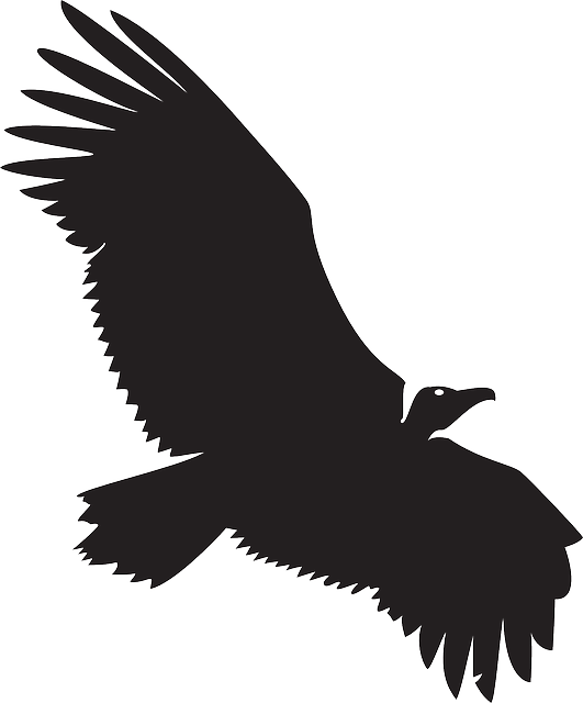 Condor vector silhouettes. Eagle wings google search