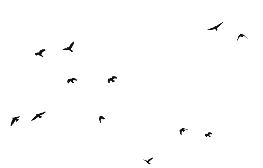Birds silhouette png. Bird transparent images all