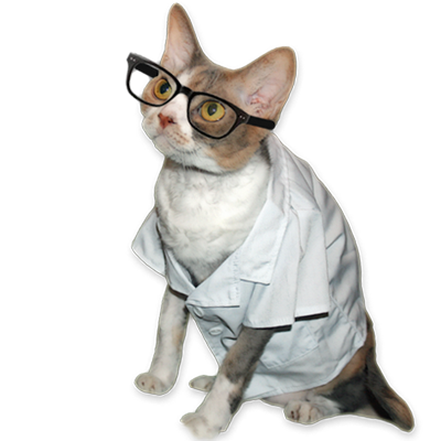 Confused cat png. Professor daisy shares important