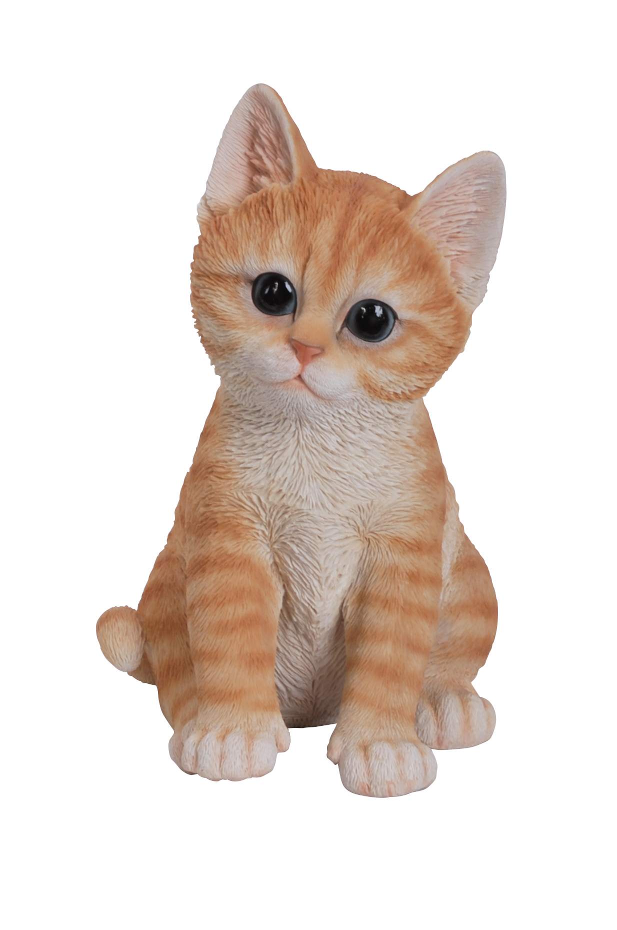Confused cat png. Helpful advice about cats