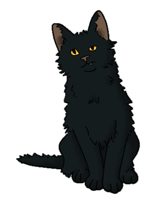 confused cat png