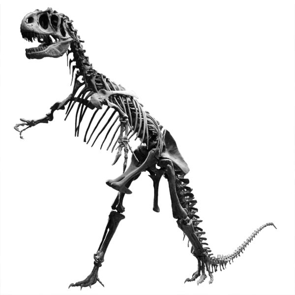 Confused dinosaur png. That has legs or