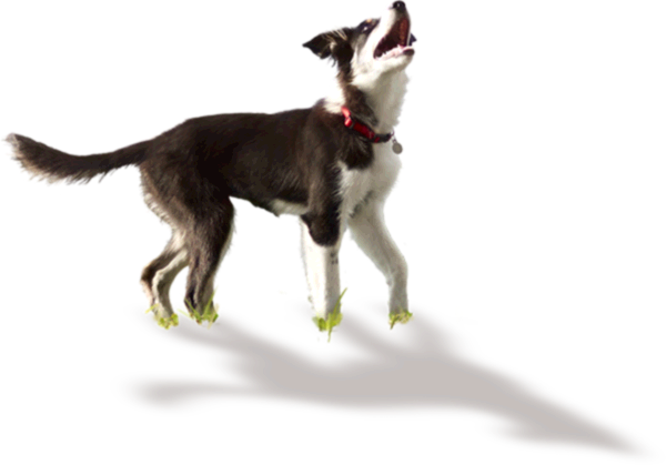 Confused dog png. Hill s science diet
