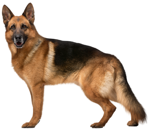 Dog clip art sa. German shepherd puppy png svg transparent library