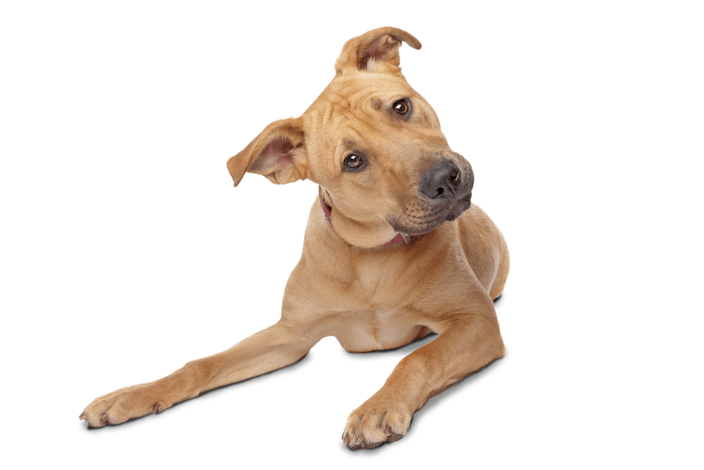 Confused dog png. Frequently asked questions barks