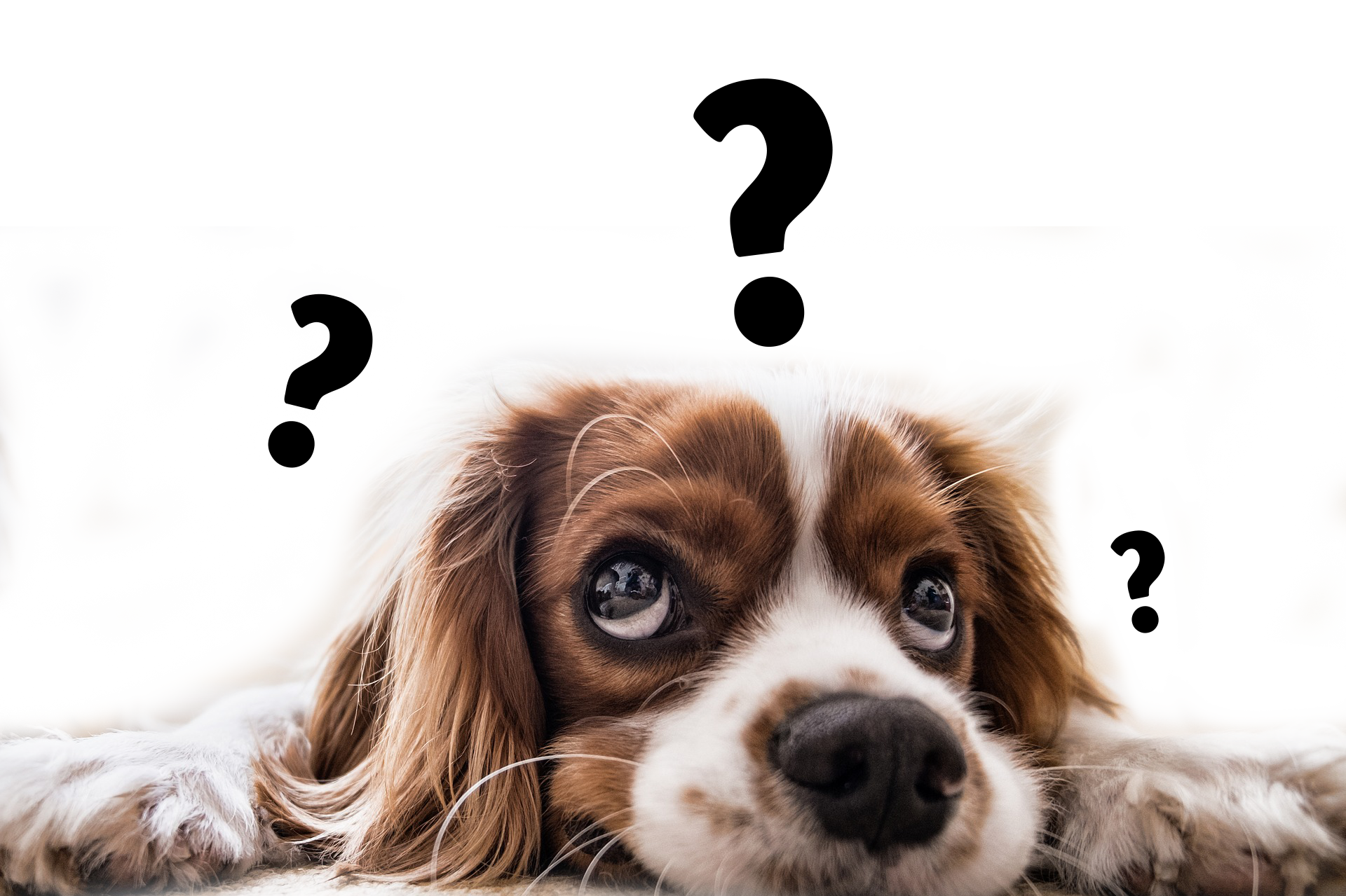 Confused dog png. Of people would