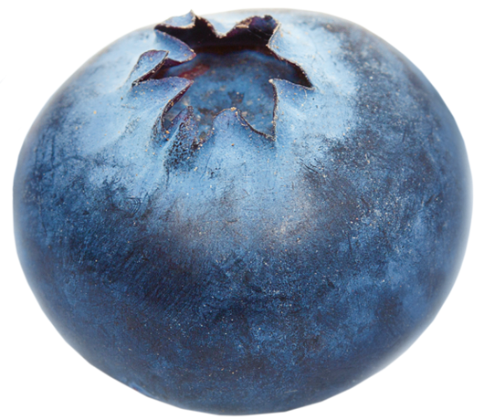 Conical blueberry