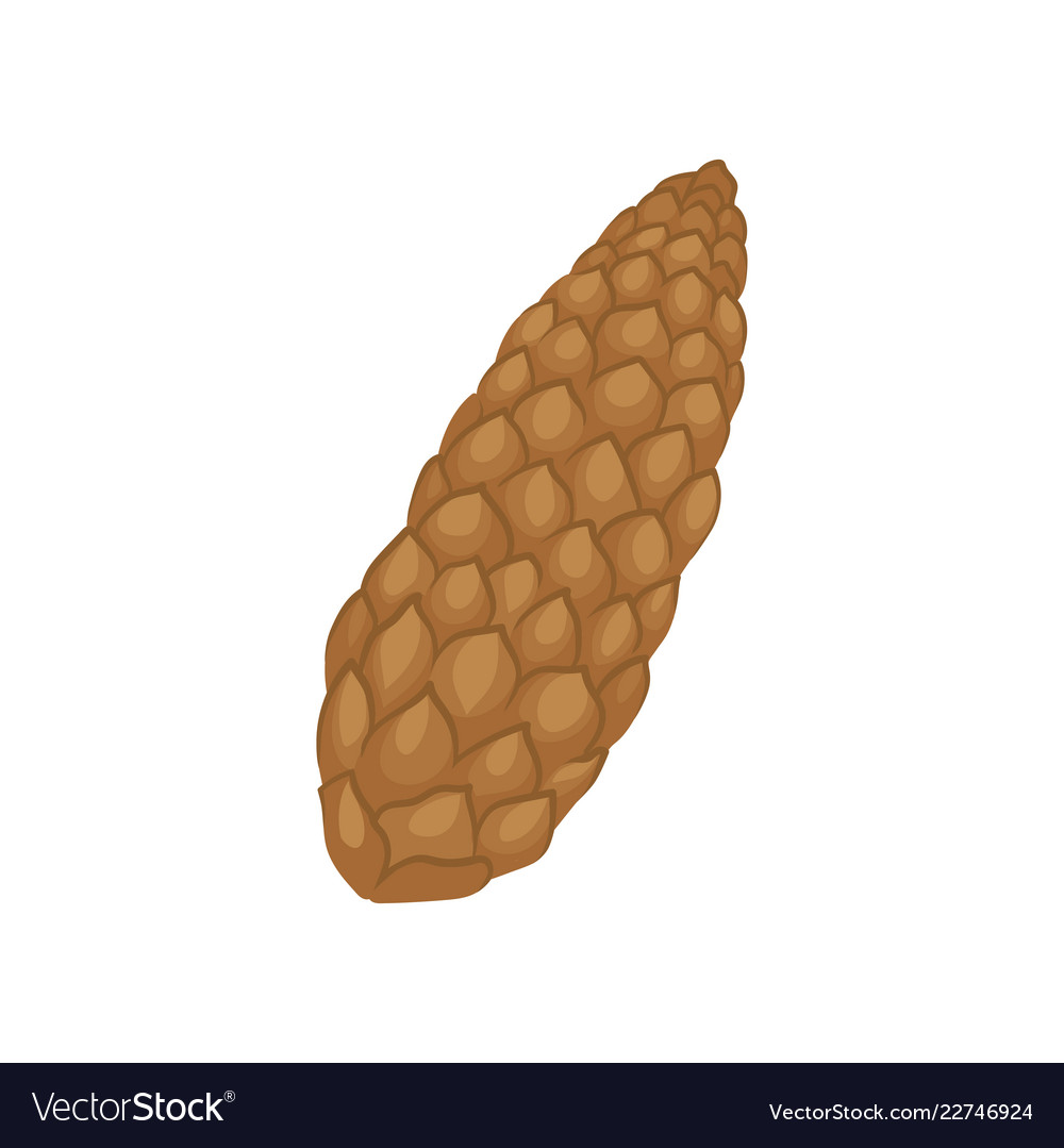 Conical fruit. Brown fir cone of