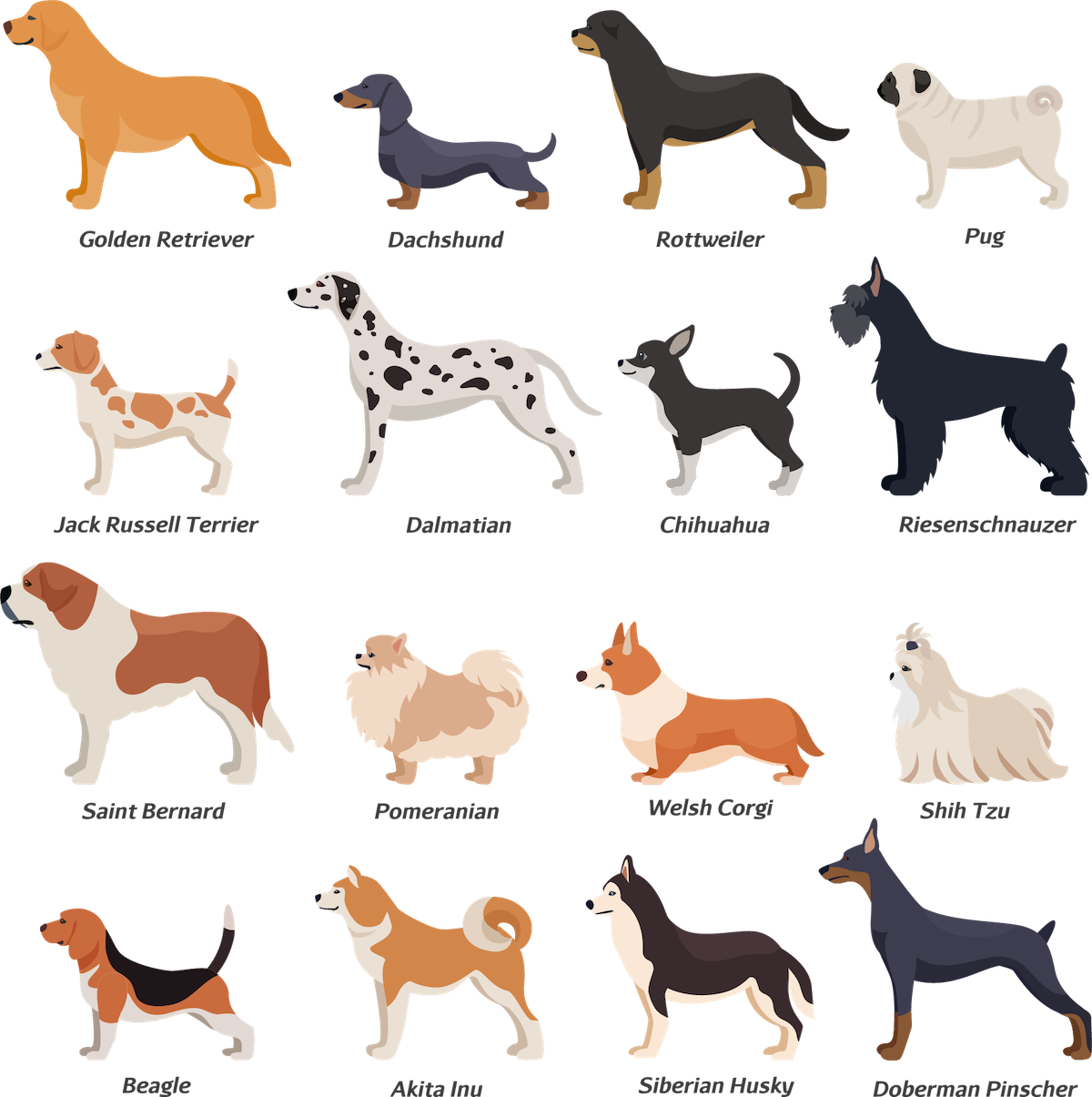 Continental clip popular. Most dog breeds in