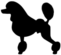 Continental clip dog. The akc poodle standard