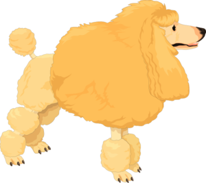 Poodle clipart brown poodle. Fluffy yellow clip art