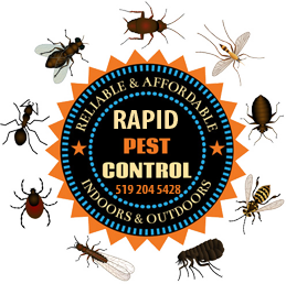 Vector insects pest control. Rapid london on contact