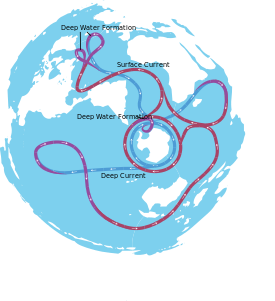 Convection drawing ocean current. Thermohaline circulation wikipedia the