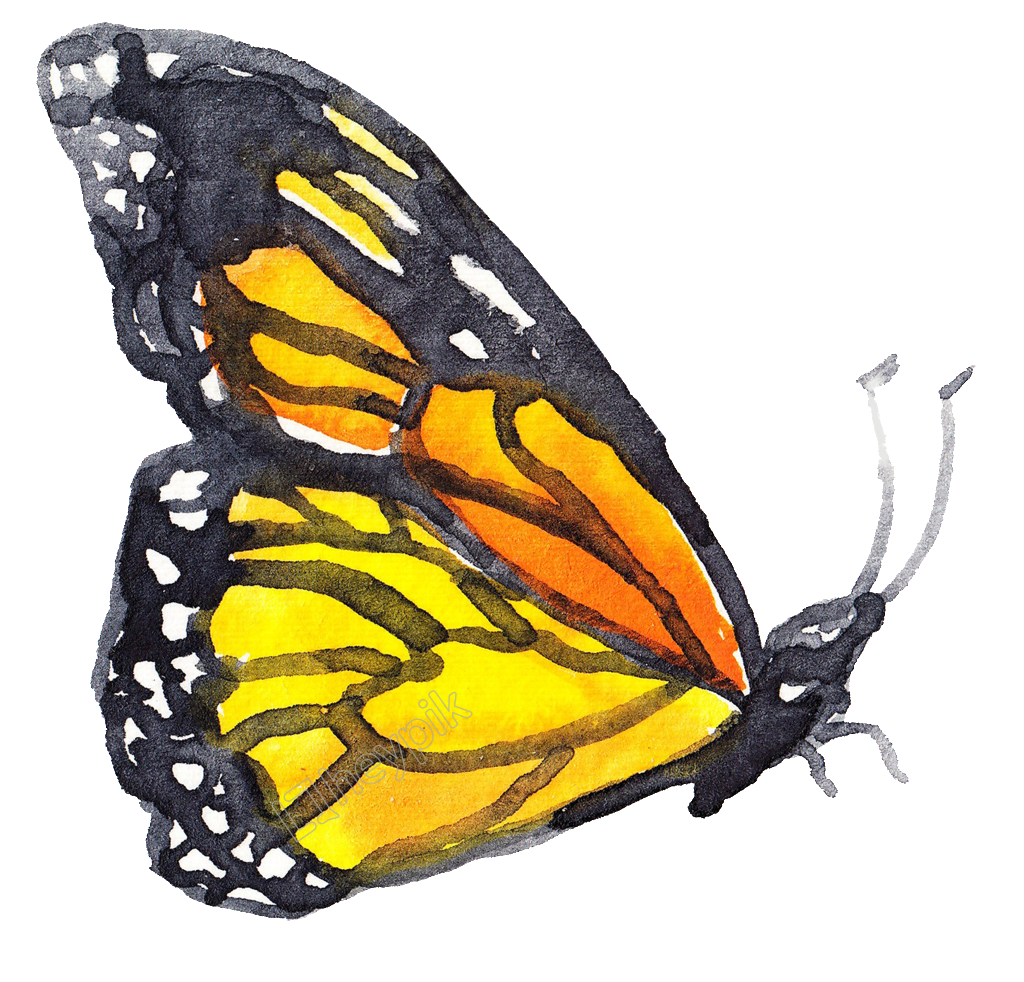 Ai vector watercolor butterfly. Coral transparent decorative free