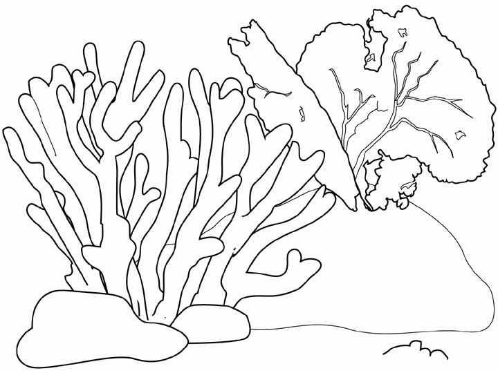 Grouper Found a Sea Shell in Coral Reef coloring page | Free ... | 540x720